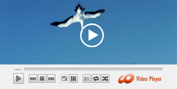 Windows Video Media Player Screenshot